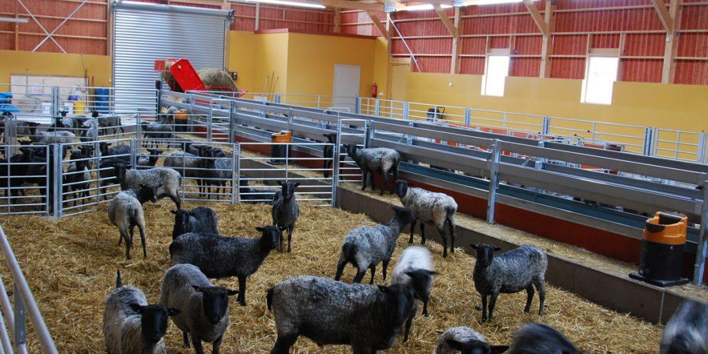 Lösdriftsstall för får